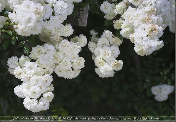 D700_2013-06-11_004