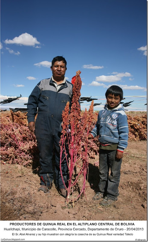 Productores de Quinua Real  en el Altiplano Central de Bolivia -LaQuinua.blogspot.com-Ruben Miranda