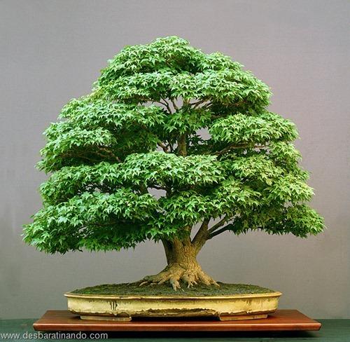 bonsais arvores em miniatura desbaratinando (7)