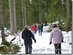 Skovtur i Sverige
