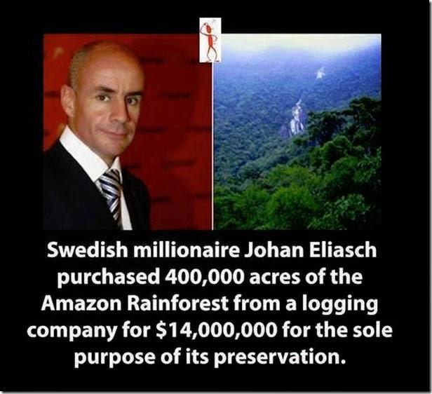 millionaire rain forst