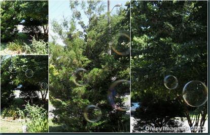 bubbles collage1
