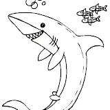tiburon_9.jpg
