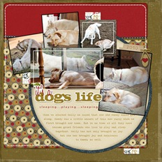 DogsLife-copy