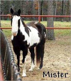 Mister  (2)