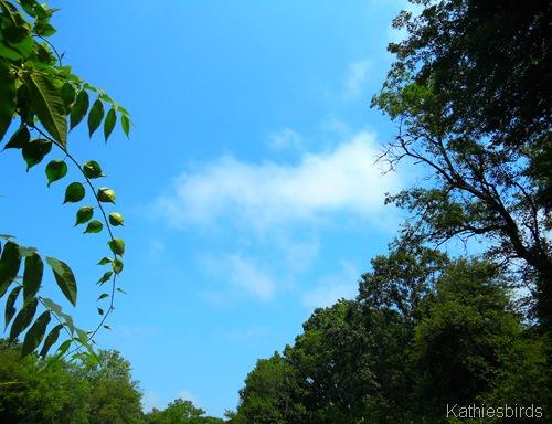 15. blue sky-kab
