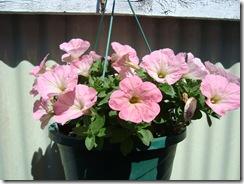 july flowers 20115