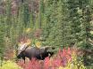 2011_Kalr_Kanada_Alaska22.JPG