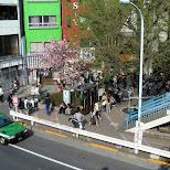 cherry blossoms in Harajuku, Japan in Harajuku, Tokyo, Japan