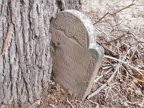 This 18th century headstone has become part of the trunk of this ravenous tree