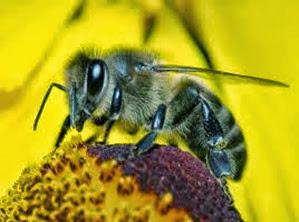 Amazing Pictures of Animals, Photo, Nature, Incredibel, Funny, Zoo, Bee, Insetcs, Anthophila, Alex (7)