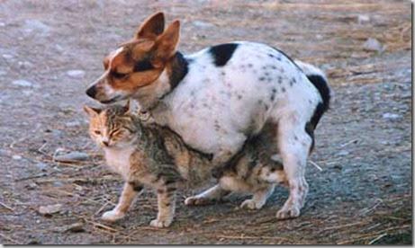 Tgvet riproduzione cani e gatti - Colorazione immagine di un cane ...