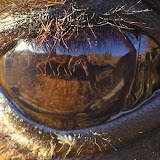 Close up of a camel eye.  Sand dunes, a small oasis, and I are visible in the reflection.