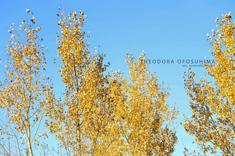 theodora ofosuhima autumn trees