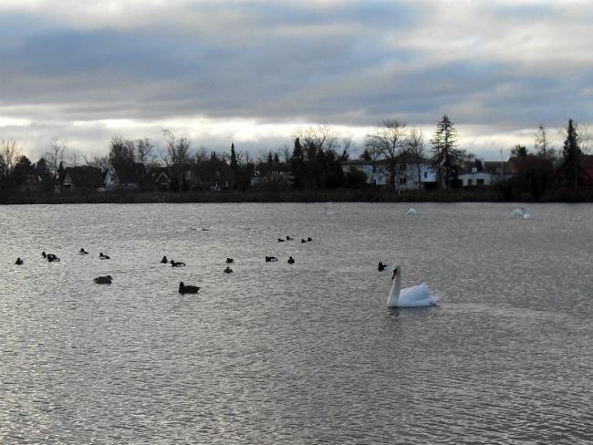 Damhussøen, januar 2013