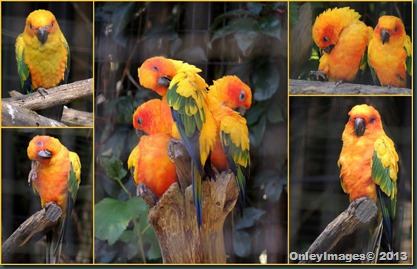colorful birds collage