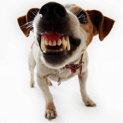 dog-bark1