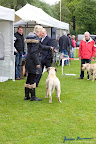 20100513-Bullmastiff-Clubmatch_31036.jpg