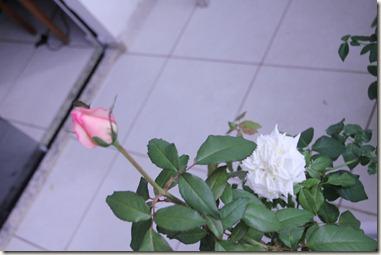 08-07-2012 003