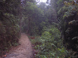 The path to the waterfall, Gn Jantan (Daniel Quinn, October 2010)