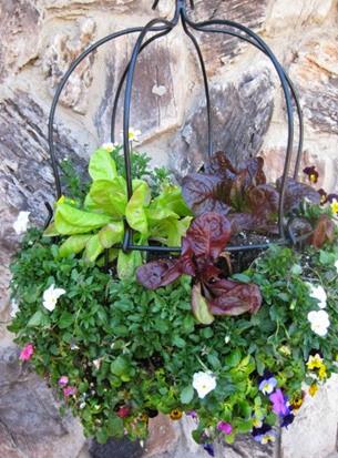 lettuce_basket