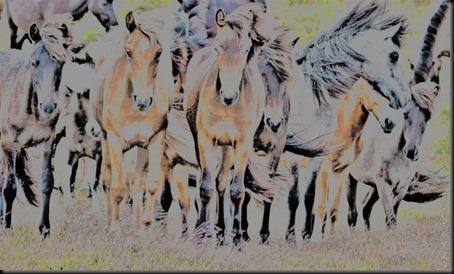 pm_20110625_horses