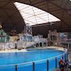 Boudewijn Seapark-026.JPG