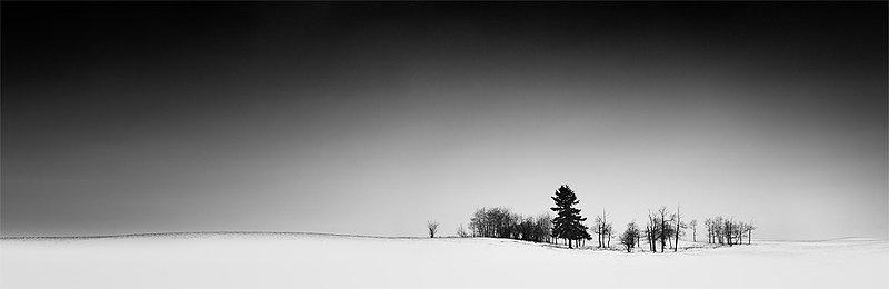 14-olivier-du-tre_snowy-trees.jpg