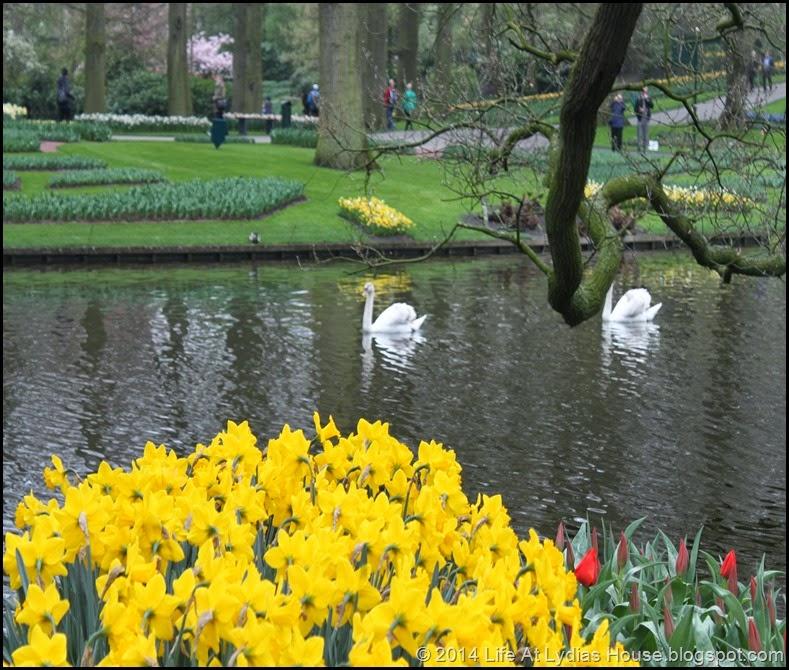 Keukenhof Gardens 17