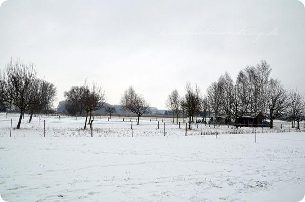 Schneesonntag 20zwölf (6)