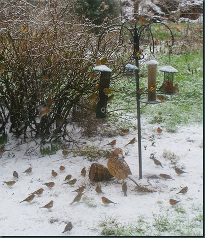 2 feeding-in-the-snow 26 Jan