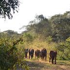Feierabendverkehr im Sheldrick Elefantenwaisenhaus  © Foto: Susanne Schlesinger | Outback Africa Erlebnisreisen