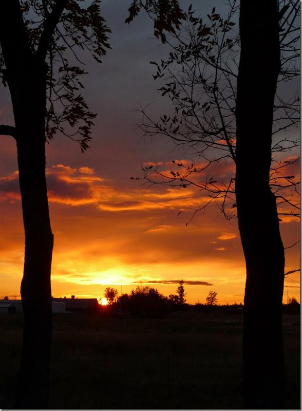 sunsets 019