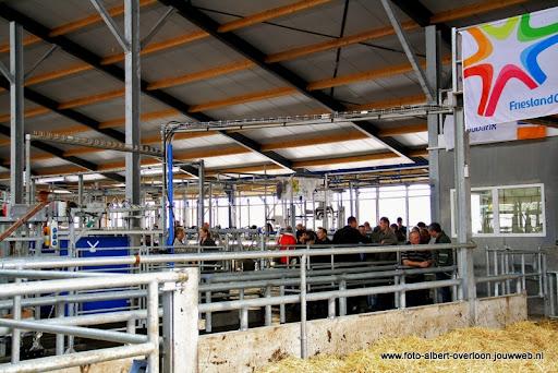 koeien kijken boer martij 18-06-2011 (39).JPG