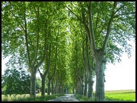 c tree arches