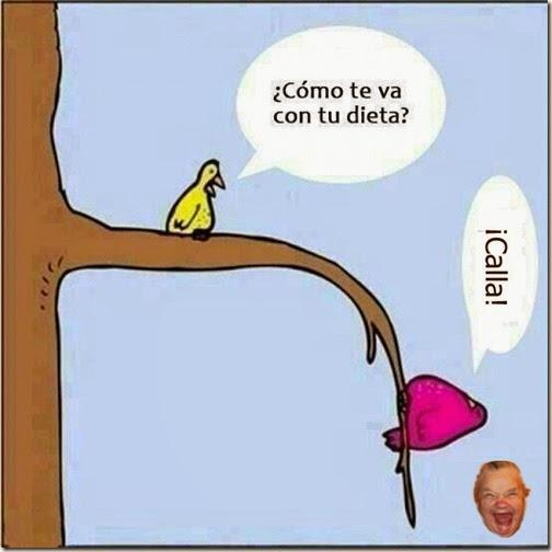 dieta 1
