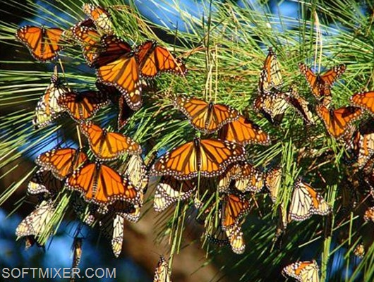Monarch-butterfly-photo-book