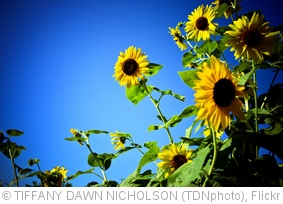 'colors' photo (c) 2010, TIFFANY DAWN NICHOLSON (TDNphoto) - license: http://creativecommons.org/licenses/by-nd/2.0/