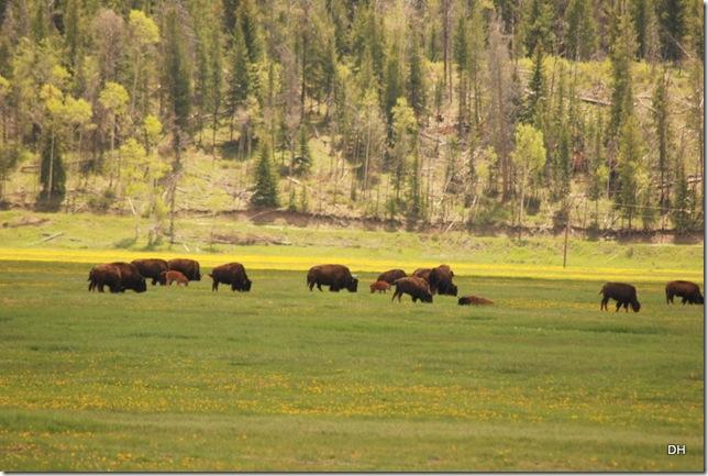 06-07-13 A Elk Ranch Flats (15)