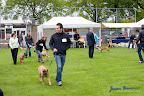 20100513-Bullmastiff-Clubmatch_30842.jpg
