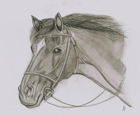 """Retrato del caballo Joey de la película """"War Horse"""" por Dolores Hernández"""