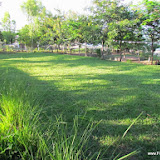 'nieuwe grasveld'