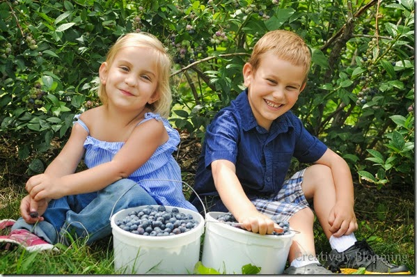 Paulus Orchards - Blueberry Picking