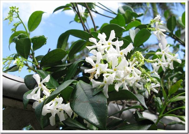 04-20-conf-jasmine