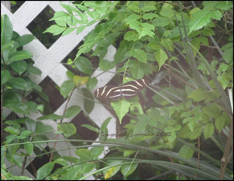 08-27-zebra