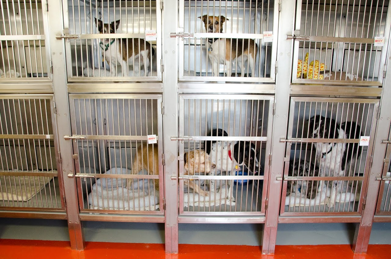 All the dogs in their kennels