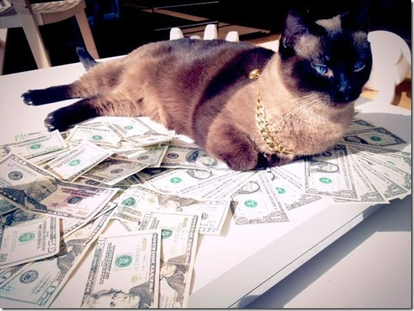 rich-wealthy-cats-7