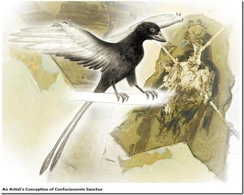 plumas-aves2