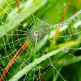 Foggy morning by Petra Cvetko - Nature Up Close Webs ( tiny, water, water drops, grass, dew, green, web, morning dew, morning, spider web, droplets, nature, fog, outdoor, meadow, drops, nature up close, dew drops,  )