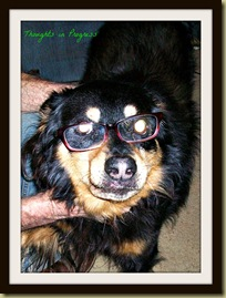Brisco & Glasses